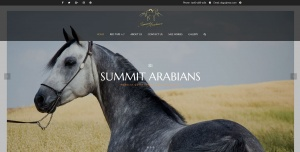 Summit Arabians Website Design Internet Marketing